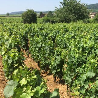 Produits Vigne